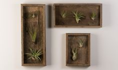 Air Plant Shadow Boxes Wall Gallery | Groupon