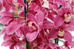 orchids_pink_skin_flower_nature_hd-wallpaper-2013870.jpg (JPEG Image, 1920×1280 pixels) - Scaled (43%)