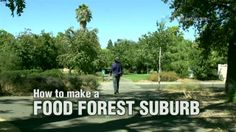 How to Make a Food Forest Suburb. Welcome to Village Homes, Davis California where 38 years ago architect Michael Corbett built rainwater retending soil preserving wind blocking food forest neighborhood.