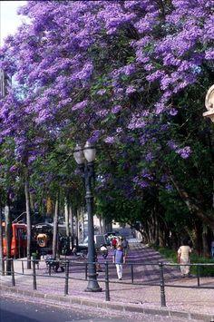 Passeio Público. Curitiba.Arquivo/SMCS