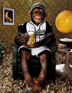 Funny monkey pictures and cute monkey cartoons Monkey See Monkey Do, Monkey Art, Funny Monkey Pictures, Funny Photos, Animals And Pets, Funny Animals, Cute Animals, Barrel Of Monkeys, Morning Memes