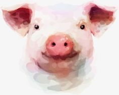 Watercolor painting pig, Watercolor, Painted, Pig PNG and Vector