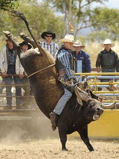 45 Best Bucking Hunger Images Bull Riding Cowboy Art Rodeo