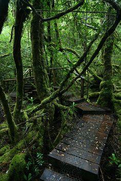 Creepy crawly track in the Great Wilderness of Tasmania, Australia (by Eddy.H).
