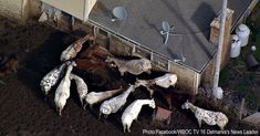 HORRIFIC: 25 Horses Found Dead, Another 100 Starving And Eating The Aluminum Siding Off House