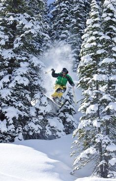 Ski the trees