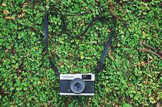 Analog film camera on green plant ~ Arts & Entertainment Photos on Creative Market
