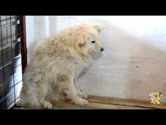 Wetnose Romania Documentary  - Broken Bodies and Broken Minds   Finally, this is the documentary that tells the facts in Romania as they really are, regarding the stray dog issue.  This is a factual, yet emotional film, that shows the horrors of what goes on, and the efforts of those that are trying to put it right. Our thanks to all who helped put this together.   RIP all those who have died so needlessly.  SHARE!! SHARE TO EVERYWHERE AND PLEASE WATCH THE FILM!!!