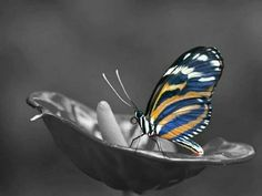 splash of color Photo B, Color Photography, Color Splash, Contrast, Butterfly, Black And White, Stuff To Buy, Kiss, Monochrome