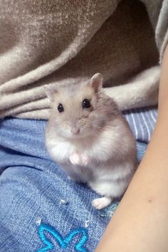 Hamsters As Pets, Funny Hamsters, Dwarf Hamsters, Rodents, Cute Kawaii Animals, Cute Little Animals, Cute Little Things, Felt Animals, Animals And Pets