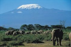 Amboseli Day Trip – 1 Day Trips to Amboseli    Day Trip to Amboseli from Nairobi    Amboseli Private or Joining/Join in Day Trip    amboseli_camping Amboseli day trip is a full daytrip safari to Amboseli national park. A day trip to Amboseli is also like a 1 day trip to Kilimanjaro as you can see the mountain from a close range. One Day trip to Amboseli takes the Nairobi – Emali – Irimito gate road or the Nairobi – Namanga – Meshanani gate. Amboseli park day trip isbest daytrips from Nairobi