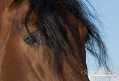 Andalusian Stallions Eye  Fine Art Horse Photograph by Carol Walker www.LivingImagesCJW.com