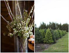 Chrsitmas Tree Farm