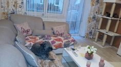 Couch, Furniture, Home Decor, Animals, Homemade Home Decor, Sofa, Couches, Home Furnishings, Sofas