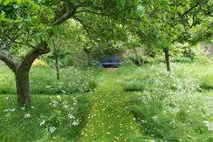 Blue Bench transitional-landscape / Todd Haiman Landscape Design