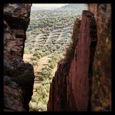 Olivar de montaña. Mountain olivetrees.