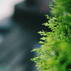 もにもに  雨の朝 心もウルウル まいりましょ  #ほんまちあるき  by mon_ami_2000
