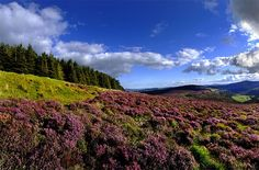 Just outside Dublin, find some 20,000 hectares of gloriously open parkland spotted with historical structures, visitors' centers, flora, and fauna. Trundle through blanket bog and deciduous forest on your way to Glendalough, a medieval monastic settlement tucked into a glacial valley.