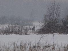 and ... moose; Białowieża Biodiversity Academy www.WEJMUTKA.pl