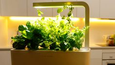The idiot-proof Smart Herb Garden comes with cartridges for basil, thyme and lemon balm, and waters and lights itself as often as needed.