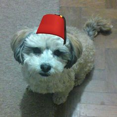 I wear a fez now, fezzes are cool @selpioli