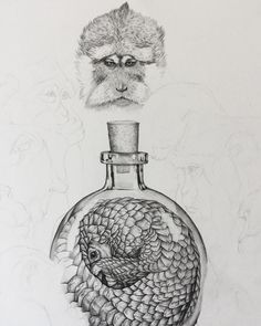 A message in a bottle from the worlds most trafficked animal - the Pangolin. Work in progress for exhibition opening at The Great Exhibition of The North - Newcastle.-#pencildrawing #pangolins #macaque #GEoTN #greatexhibitionofthenorth #wildlifetrafficking #fineart #drawing #wip #workinprogress