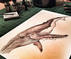 Progress Picture number 3 Prints of my Humpback Whale drawing are available in my shop at: https://www.etsy.com/listing/201834858