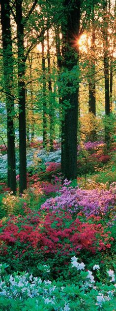 Mystical flower forest • photo: Europosters