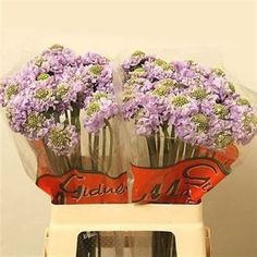 Seasonal, Scabious Lavender Scoop - 2018 Wedding Trend: Ultra Violet Purple. For lilac and purple wedding flowers to suit your colour scheme, visit our website at www.trianglenursery.co.uk/fresh-flowers!