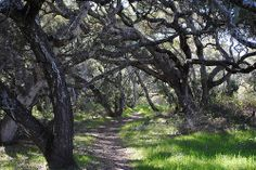Los Osos Oaks State Natural Reserve