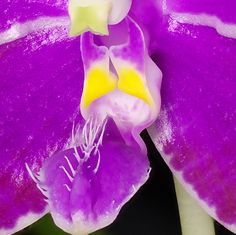 phalaenopsis lueddemanniana | RE: Phal. lueddemanniana - 9
