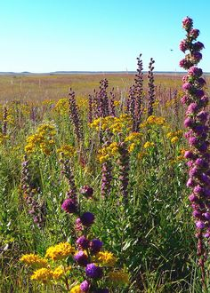Protecting the Flint Hills Tallgrass Prairie Prairie Meadows, Kansas Day, Flint Hills, Great Plains, Love Images, Fantastic Art, Outdoor Photography, Floral Bouquets, Amazing Nature