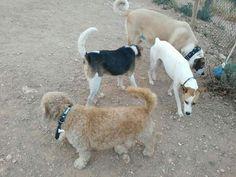 Juegos en el parque canino 07/16
