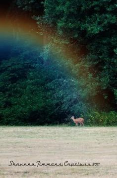 rainbow, free photoshop actions