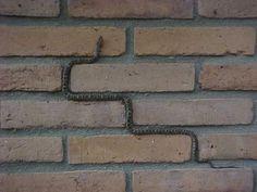 Snake photographed at the Coronado National Memorial.