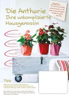 Ontwikkeling promotiematerialen potanthurium - doorvertaling verkoopconcept richting telers, handel en retail, voor NL, UK, FR en DE. http://retail.flowercouncil.org/nl/productspecial/potanthurium#downloads