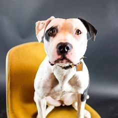 Dads got a new camera!! #hannahmontana #follow #love #endbsl #pit #pits #pity #prom #puppy #pitbull #pitbull_famous #pitbulladvocate #pitbullsofinstagram #dog #dogs #doggy #doglife #dogsofchicago #chicagodogs #dogsofinstagram #hannah #pup #puppyeyes #cuddleclones #ccpetoftheweek } Photo : http://bit.ly/1qsZDQu