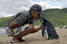 Un pingüino nada cad