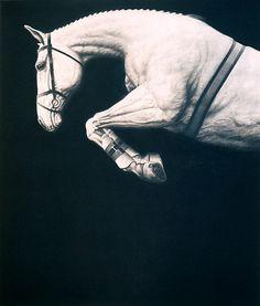 Joseph Piccillo, #12 (2006) || BW grey jumper free jumping at liberty