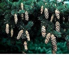 how to clean pine cones for wreaths