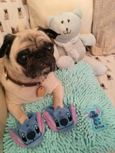 For Stitch and Pug lovers #Cheeze