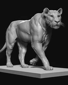 Lion anatomy study doing for the by RafGrassetti Lion Anatomy, Anatomy Art, Lion King Art, Lion Art, Animal Sketches, Animal Drawings, Animal Sculptures, Lion Sculpture, Anatomy Sculpture