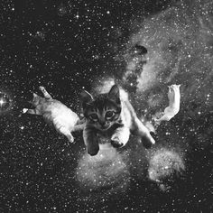 Cats in Space Funny Cats, Funny Animals, Cute Animals, Crazy Cat Lady, Crazy Cats, I Love Cats, Cool Cats, Trippy Cat, Galaxy Cat