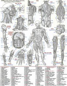 ALEFReferenceCards-Anatomy 4 - Side 1.Jpg 1,614×2,074 pixels
