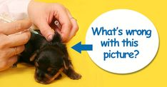 3 Puppy Vaccination Mistakes: Too Early, Too Often, Too Much - Dogs Naturally Magazine