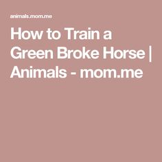 How to Train a Green Broke Horse | Animals - mom.me