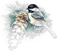 Black-capped Chickadee watercolour bird art wildlife art