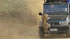 Leopard rushed into the car and attacked the man, scared the driver to step on the accelerator, an accident happened