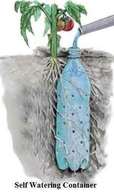 Gardening, creative gardening ideas, reduce, reuse, and recycle.