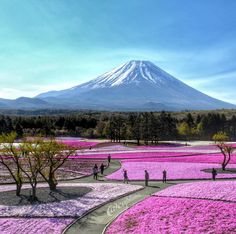 """Mount Fuji, Japan. Japan's Mt. Fuji is an active volcano about 100 km southwest of Tokyo. Commonly called """"Fuji-san,"""" it's the country's tallest peak, at 3,776 m. A pilgrimage site for centuries, it's considered one of Japan's 3 sacred mountains, and summit hikes remain a popular activity.  Photo by capkaieda via Instagram #amitrips #nature #asia #travel"""